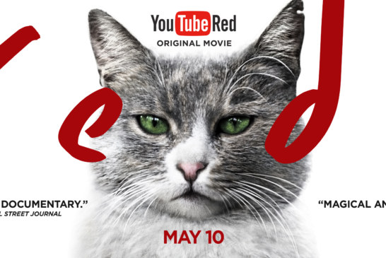 KEDI Will Be Hitting YouTube Red THIS WEEK!