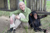War For The Planet Of The Apes Has Teamed Up With The Jane Goodall Institute