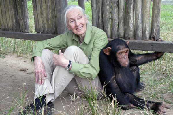 20th Century Fox & Jane Goodall Foundation Announcement